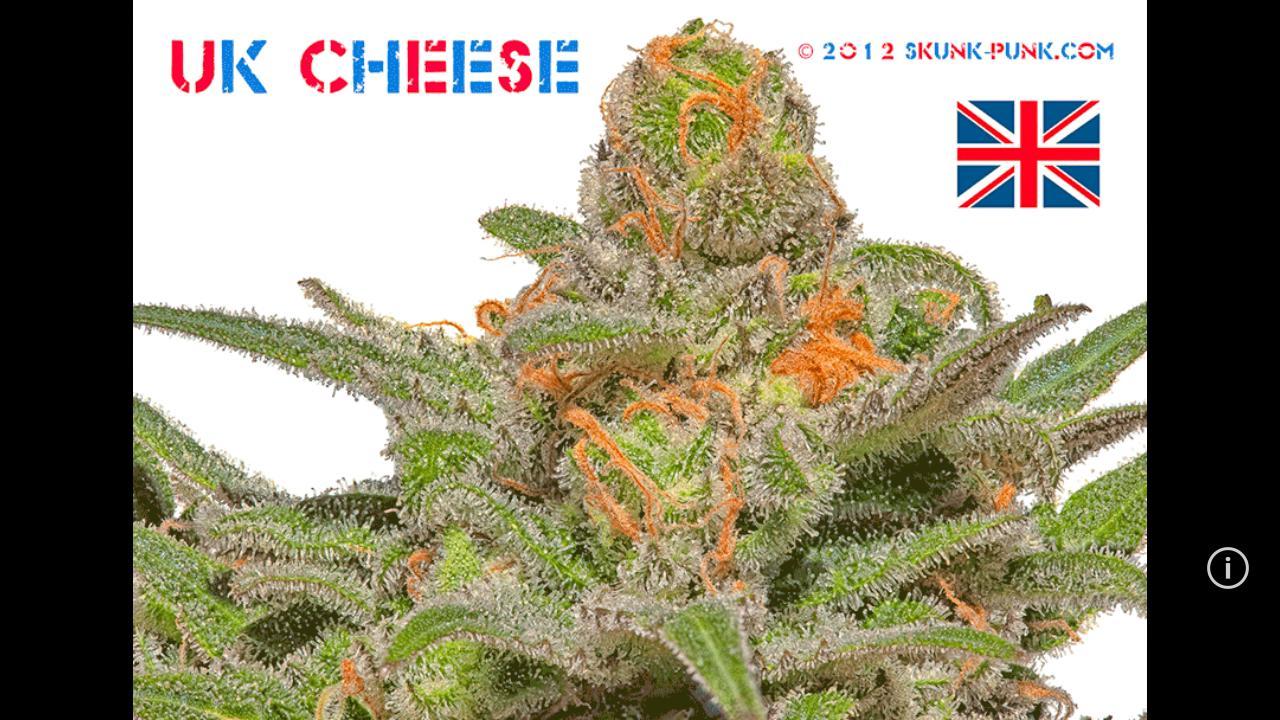 Google themes weed - Skunk Punk Marijuana Images Screenshot
