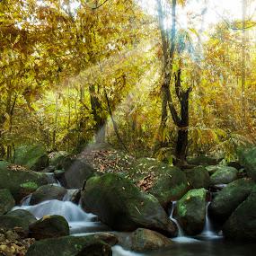 Ulu Yam Stream by Bernice Then - Landscapes Waterscapes ( ulu yam, water fall,  )