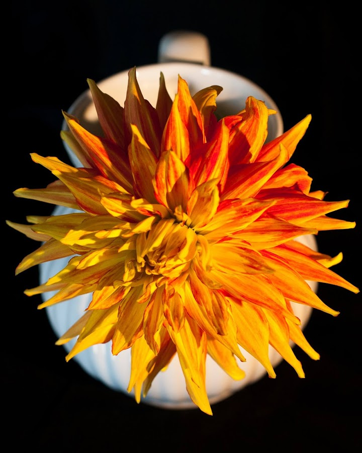 by Sherry Prior - Uncategorized All Uncategorized ( Flowers, Flower Arrangements,  )