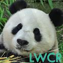 der große Panda Live Wallpaper icon
