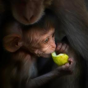Safe Shelter by John Finch - Animals Other Mammals ( baby monkey, animals, monkeys, nature and wildlife, thailand,  )