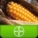 Καλαμπόκι Bayer CropScience