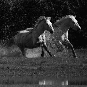 by Angelo Butera - Uncategorized All Uncategorized ( black and white, animal )