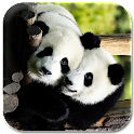 panda lock & wallpaper icon