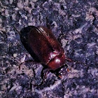 June Bug