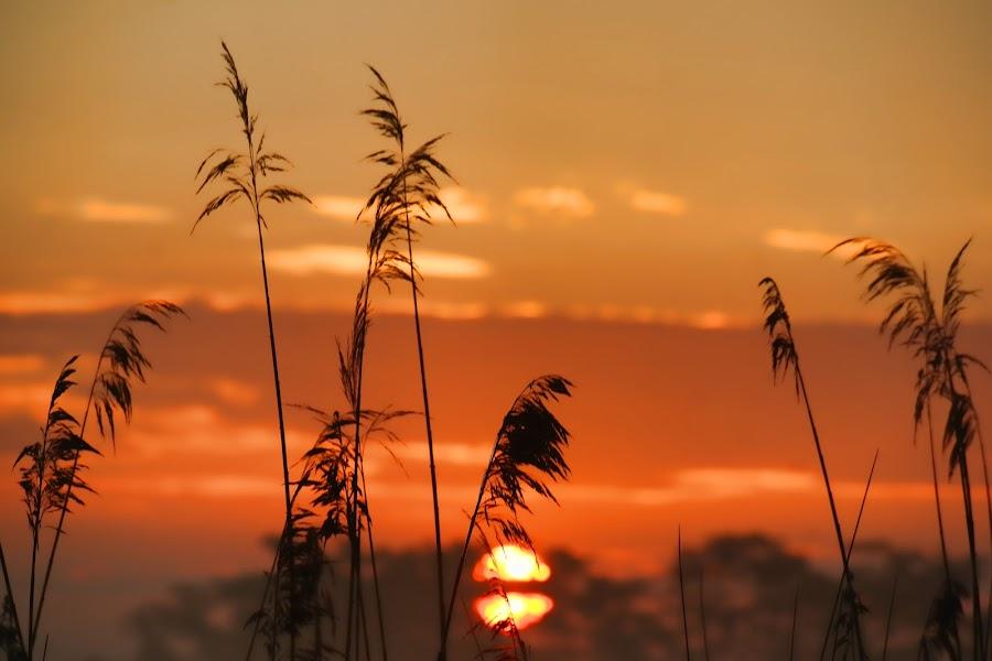 SunRise by Murat Can - Uncategorized All Uncategorized ( nature, sunrise, sun )