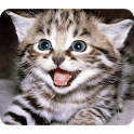 Funny Cute Cat icon