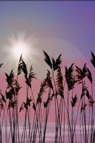 Reeds Live Wallpaper v1.00