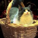 Escape: Damsel in Distress icon