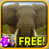 Elephant Slots - Free