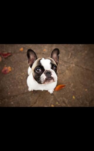 玩個人化App Dog Live Wallpaper免費 APP試玩