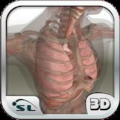 İnsan Vücudu Atlası