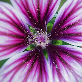 by Tiona Anglin Appel - Flowers Single Flower