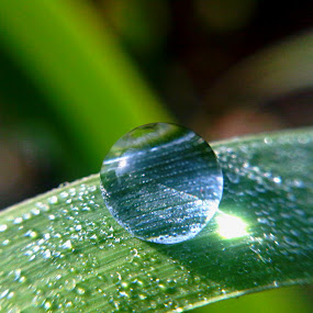 almost fall by Windu Fidyanto - Nature Up Close Natural Waterdrops