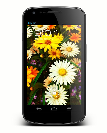 Wildflowers Live Wallpaper