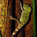 Chameleon Forest Dragon