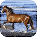 Amazing horses Video LWP icon