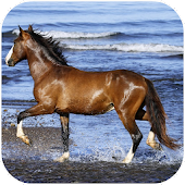 Amazing horses Video LWP