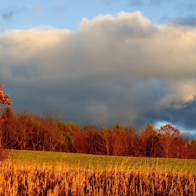 Fall Brilliance by Mary Gerakaris - Landscapes Prairies, Meadows & Fields ( cloud formations, natural light, dramatic lighting, corporate office art, artistic photography, nature, landscape photography, autumn colors, fields and sky, new hampshire landscape )