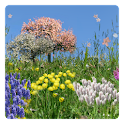 Spring Flowers Free Wallpaper logo