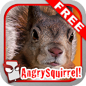 Angry Squirrel Free!
