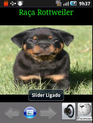 娛樂必備APP下載|Cachorros Rottweiler 好玩app不花錢|綠色工廠好玩App