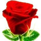 Glow Roses icon