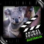 Best Australian Animals Sounds