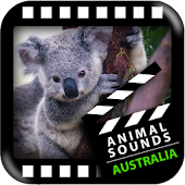 Best Australian Animals Sounds