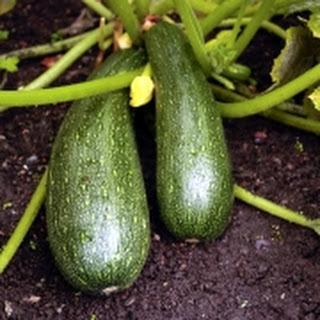 Courgette-portobellosalade
