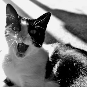 Feroce  by Andrei Diana - Animals - Cats Portraits (  )