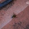 uncertain bug