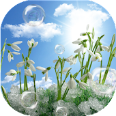 Snowdrops Live Wallpaper HD
