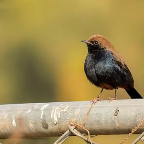 by YSKAy ClickZ - Animals Birds