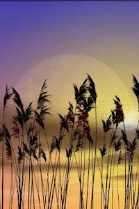 Reeds Live Wallpaper v1.09