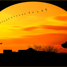 Sunset by Nayyer Reza - Landscapes Sunsets & Sunrises ( flock of birds, colour, clouds, orange, pakistan, silhouette, sunset, moving clouds, yellow, nayyer, birds, reza, color, colors, landscape, portrait, object, filter forge )