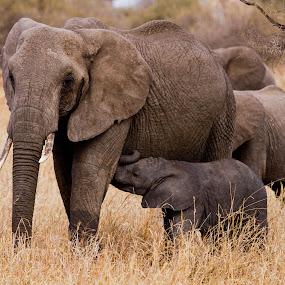 by Sam Simon - Animals Other Mammals