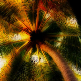 Palm Tree by Tim Nichols - Nature Up Close Trees & Bushes ( palm tree )
