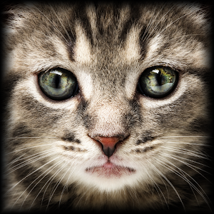 cat and mouse games dating Sometimes people play a game of cat and mouse wherein they manipulations now while dating, it might be time to find another cat who.