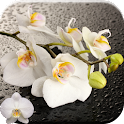 Orquídea Live Wallpaper icon