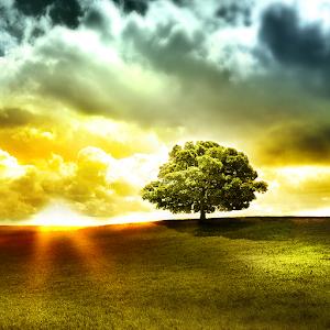 Beautiful Tree live wallpaper 個人化 App LOGO-APP試玩