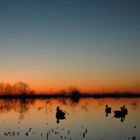 Beautiful brisk morning... by Cliff Dowden - Landscapes Prairies, Meadows & Fields ( ducks, sunrise, morning, prairie, stillness,  )