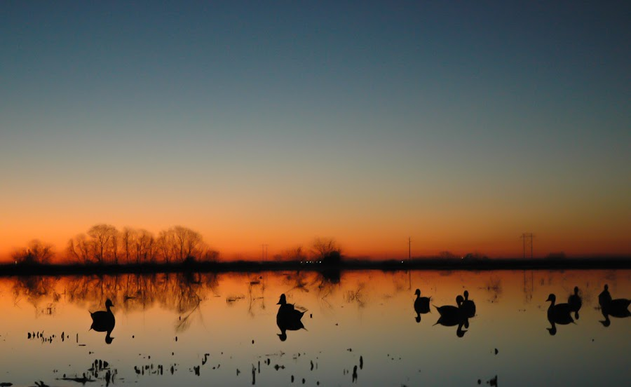 Beautiful brisk morning... by Cliff Dowden - Landscapes Prairies, Meadows & Fields ( ducks, sunrise, morning, prairie, stillness,  )