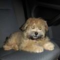 Teddy'