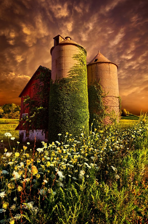 Stillness Of Dawn by Phil Koch - Buildings & Architecture Other Exteriors ( vertical, wisconsin, ray, ivy, phil koch, landscape, spring, photography, sun, photooftheday, love, wicounties, farm, sky, barn, nature, tree, vines, bestoftheday, horizons, flower, instagood, follow, clouds, park, green, twilight, horizon, scenic, queens anne's lace, silo, shadows, wild flowers, field, picoftheday, red, fog, sunset, meadow, landscapephotography, trees, beam, sunrise, landscapes, floral, mist,  )