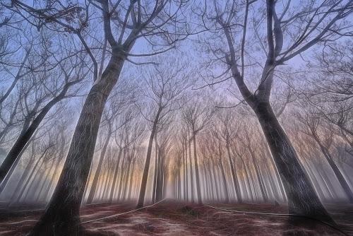 Fantasy Trees by Jim Merchant - City,  Street & Park  City Parks ( fantasy, trees, magic light, sunrise,  )