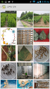 Sericulture Information- screenshot thumbnail