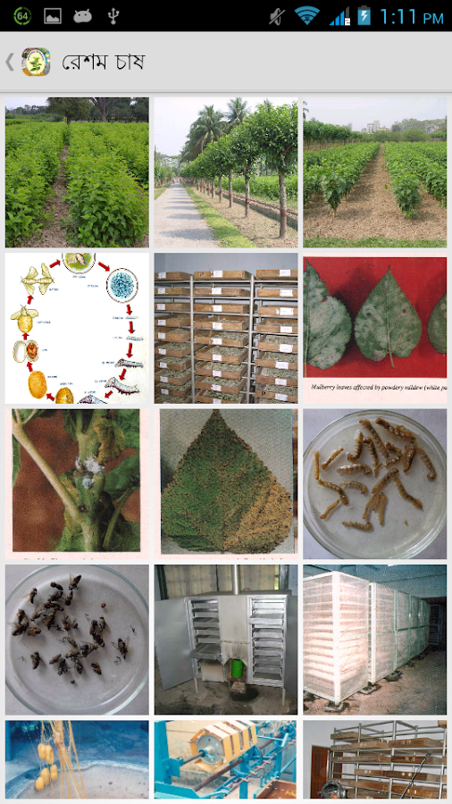 Sericulture Information- screenshot