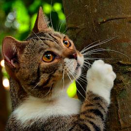 by Neni Wijaya - Animals - Cats Playing ( bekasi, cat, ciketing, mygarden, animal )