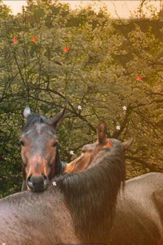 Horse Love Spring Plum Rain
